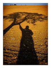 man & tree (Armin Fuchs) Tags: arminfuchs würzburg oberdürrbach herbst autumn man tree shadows sky blue yellow landscape niftyfifty october afternoon