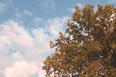STILL. (shotbyruben.) Tags: nature naturephotography wildlife outdoor day sunny sunshine art naturelife natureoutdoor photography peaceful emotional landscape beautiful rubenimages canon canonphotographer artphotography skyphotography skyscape skyscapephotography skyline artsky