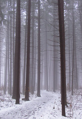 Snow & Fog (michellewendling907) Tags: winter fog mist snow