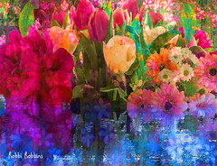 Reflect (brillianthues) Tags: flowers floral garden nature photography photmanuplation photoshop colorful collage