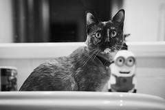 Cat and minion (Hector Corpus) Tags: leicam240 leicasummiluxm50mmf14asph cat blackandwhite