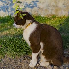 canela 2 (cristina.colmenares) Tags: cats cat aftermoon animal littleanimal light rosa nose nariz bigotes mostaches