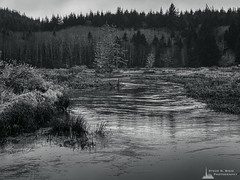 Mobile Black and White Photography-Project 2020-17 (Steve G. Bisig Photography) Tags: blackandwhite blackandwhitephotography flood fortclatsop landscape landscapephotography monochrome monochromephotography nature naturephotography northamerica oregon outdoor outdoorphotography outdoors river trees unitedstates usa