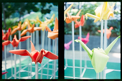 #origami #birds #halfframe #dailylife (S.H.CHOW) Tags: origami birds halfframe dailylife 38mmf18 analog chowsheuhau diycolordev expiredfilm film filmisnotdead fujifilmpro400h olympus pro400h penft sheuhauchow unicolorc41kit zuiko38mmf18 shchow filmphotography