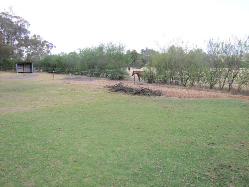 Our Utility Paddocks With Eroding Areas Mulched