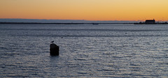Cape Cod Bay at Sunset (brucetopher) Tags: sunset water sea ocean beach shore seashore cove bay harbor orange light skies sky glow afterglow