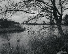 Mobile Black and White Photography-Project 2020-16 (Steve G. Bisig Photography) Tags: blackandwhite blackandwhitephotography flood fortclatsop landscape landscapephotography lewisandclarkriver monochrome monochromephotography nature naturephotography northamerica oregon outdoor outdoorphotography outdoors river trees unitedstates usa