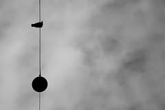 (Mikko Luntiala) Tags: 2012 afsdxnikkor18105mmf3556gedvr april bw bird blackandwhite d90 finland gray grey harmaa helsinki huhtikuu katulamppu lintu mikkoluntiala mustavalkoinen nikond90 silhouette siluetti sky streetlight suomi taivas