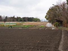 Fields and vegetable gardens (Greg Peterson in Japan) Tags: 滋賀県 畑 ritto japan shiga fields 栗東市 植物 hayashi plants shigaprefecture