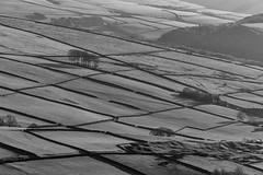 Walls (l4ts) Tags: landscape derbyshire peakdistrict darkpeak hayfield kinderscout lanternpike drystonewalls blackwhite monochrome