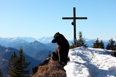 eddie sit (VIII) (bkellerstrass) Tags: hund dog gipfel summit peak peakmark gipfelkreuz winter alpen alps schnee snow grasleitenkopf wandern hiking lenggries bayern bavaria oberbayern berg berge mountain mountains