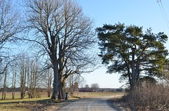 Januari 2020. (johnerlandaxelsson@gmail.com) Tags: tierp uppland sverige natur landskap landscape johnaxelsson
