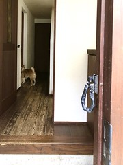 iphone photo 2745: You don't welcome me? Akabane Tokyo, 25 Jan 2019 (megumi_manzaki) Tags: iphone dog home door