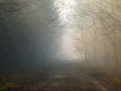 Foggy day (Dumby) Tags: landscape ilfov românia outdoor fog nature lowcontrast forest winter
