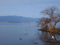 Biwako (Greg Peterson in Japan) Tags: biwako japan 草津市 kusatsu shiga 琵琶湖 滋賀県 shigaprefecture