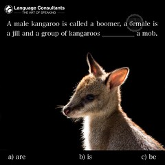 #Language #Consultants play a central role in #BringingTheWorldToYourDoorstep so you can #exchange #ideas, #learn, #think, #create and #collaborate more effectively in #English. #TheArtOfSpeaking #Kangaroo (The English Verb) Tags: language consultants bringingtheworldtoyourdoorstep exchange ideas learn think create collaborate english theartofspeaking kangaroo