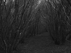 Forest Footpath on a Gloomy Winter's Day (M.T.A.V) Tags: westsussex wood woodland forest gloom dark gloomy england englishcountryside efs1855mm footpath path trees treelined eastdean south southdownsnationalpark southdowns winter wintery cold countryside blackandwhite blackwhite bw black monochrome nowhere unknown spooky lost canon canoneos750d canon750d photography photograph walkway walk winterlike wooded woodlandwalk woods goodwood