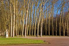 Sous les grands arbres (Chrisar) Tags: angénieux2870 arbre dxophotolab3 matin nikond750 parc versailles
