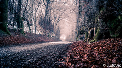 Mood of The Day 01 [Waimes, 25-01-2020] (Lцdо\/іс) Tags: waimes ardennen ardennes winter fog nature belgique belgium countryside street outdoor belgie europe europa janvier january 2020 lцdоіс