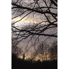 TZ X ([ Time - Beacon ] II) Tags: tb tree trees twigs boughs branches silhouettes sundown sunset sky clouds dusk