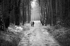 the way of the dog (beginner17) Tags: wald kinder weg baum schwarzweiss blackandwhite sony minolta md 135mm retriever hund rokkor oberhavel summterforst spaziergang kids
