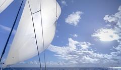 Guadeloupe - Catamaran (François Leroy) Tags: françoisleroy france antilles guadeloupe mer océan bateau catamaran voilier voile ciel bleu nuage blanc