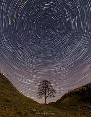 Sycamore Gap Star Trail (Nathan J Hammonds) Tags: stars star trail long exposure night sycamore gap northumberland nikon d850