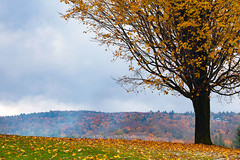 Vermont Autumn Scene - Single tree background. (baddoguy) Tags: tree autumn single object grass meadow agricultural field leaf color beauty in nature branch plant part closeup cloud sky image colored background copy space environment fog forest green hill horizontal idyllic incomplete landscape scenery light natural phenomenon low angle view morning mountain range multi multicolored parkland no people nonurban scene october orange outdoors of photography right handed rural scenics season tranquil trunk usa vermont