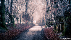 Mood of The Day 02 [Waimes, 25-01-2020] (Lцdо\/іс) Tags: waimes ardennen ardennes winter fog nature belgique belgium countryside street outdoor belgie europe europa janvier january 2020 lцdоіс