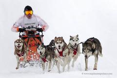 Sled dog race (My Planet Experience) Tags: alaskan husky huskies siberian snowdog sleddog team sled snow dog nordic sport speed race racing running musher mushing man winter myplanetexperience wwwmyplanetexperiencecom