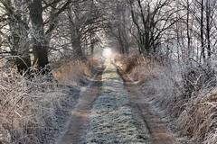 Dirt road (radimersky) Tags: hoar frost ground winter zima przymrozek krajobraz landscape day dzień niwki poland polska track road dirt trees drzewa morning poranek krzaki shrubbery europe europa silesia śląsk opolskie microfourthirds 43 dcgx9 panasonic lumixgvario1260f3556 lumix fourthirds nature landscpae droga polna lędziny