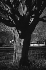 Untitled (agataurbaniak) Tags: leica iii leicaiii film analog analogue 35mm rangefinder leitz elmar leitzelmar 50mm 50 f35 35 collapsible kodak tmax 400 400asa monochromatic monochrome blackandwhite negative red filter redfilter