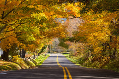 The colorful tree tunnel in autumn (Vemont) - the town road covered with fall foliage tree. (baddoguy) Tags: autumn leaf color awe backgrounds beauty in nature city image copy space covering diminishing perspective direction directional sign dividing line road marking empty famous place forest horizontal landscape scenery lush foliage majestic multi colored new england usa no people nonurban scene outdoor pursuit outdoors photography point view rural symbol tourism town tranquil tranquility transportation travel destinations tunnel two lane highway vermont yellow