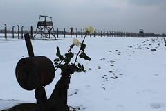 IMG_6760 (Guven Celikkaya) Tags: auschwitz birkenau poland nazi concentration polonya krakow toplama kampı