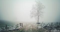 Mood of The Day 03 [Waimes, 25-01-2020] (Lцdо\/іс) Tags: waimes ardennen ardennes winter fog nature belgique belgium countryside street outdoor belgie europe europa janvier january 2020 lцdоіс