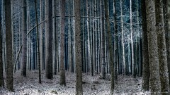 Im Wald (hapequ1) Tags: wald bäume nadelwald