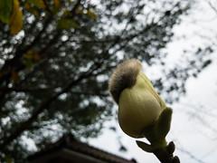 APC_0144 (kanghsing2000) Tags: 台灣 苗栗 taiwan miaoli iphonex