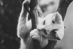 Hi there (SethBahl) Tags: monochrome cat mono eye tonedimage dark white play blackandwhite homeanimals young small