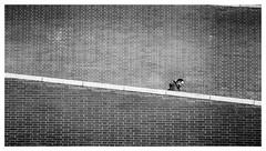 Atocha (jantoniojess) Tags: madrid españa spain estacióndeatocha atocha caminando soledad alone bajando descenso decline blancoynegro blackandwhite bw monocromático monochrome streetphotography street fotografíacallejera fotografíaurbana fotografíadecalle panasoniclumixlx100m2