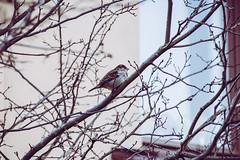 Bird in Helsinki (jansterino) Tags: bird winter tree cold nikon nikonsigma zoomlens d3300 helsinki finland suomi ullanlinna kaivopuisto