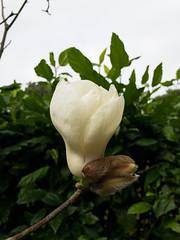 APC_0142 (kanghsing2000) Tags: 台灣 苗栗 taiwan miaoli iphonex