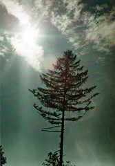 x (Willani) Tags: 35mm 35mmfilm film filmphotography analogue zenit analog zenit11 helios44m ishootfilm oldcamera oldlens sovietcamera sky clouds sun sunny tree expiredfilm strom obloha nebe mraky slunce retro vintage