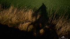 2020-01-25 09.40.19 - Golden Hour, Lys, Dag 25-366, Uge 4, Assentoft, Randers - _DSC7470 - ©Anders Gisle Larsson