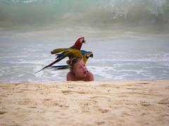 Parrots Portrait (alainazer) Tags: puntacana dominicana eau acqua water océan people personnes oiseau bird animal perroquet parrot pappagallo plage playa beach spiaggia