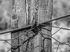 Slope (Zog the Frog) Tags: red mono monochrome wood fencepost staple wire rust lighting