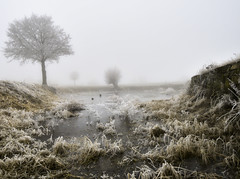 Foggy winterday (CarlH_) Tags: fog winter see cold frozen landscape