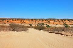 Landscape. Kgalagadi Transfrontier Park/ Kalahari Desert. South Africa. Nov/2019 (EKatBoec) Tags: landscape kgalagadi transfrontier park kalahari desert south africa nov2019