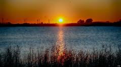 Amanece en la laguna (candi...) Tags: amanecer bassadelesolles laguna agua sol reflejos naturaleza nature sonya77ii lampolla deltadelebro