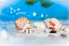 miniatuur (Photo ArTieske) Tags: flamingo miniatuur beach fantasy summer shells sea ocean