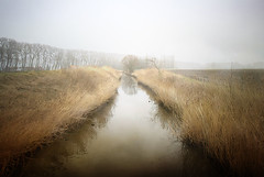 As I stood and watched the mists slowly rising this morning I wondered what view was more beautiful than this. Hal Borland (genevieve van doren) Tags: damme fog brouillard canal channel trees arbres textures